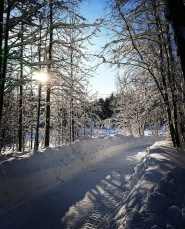 Vinterbild_Marisa